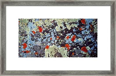 Lichens On Rock Co Usa Framed Print