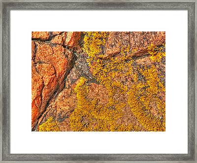 Lichens On The Shoreline Rocks 1 Framed Print
