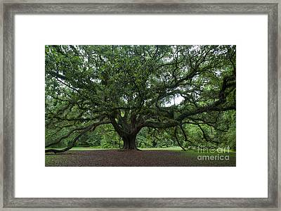 Lichgate Oak Framed Print