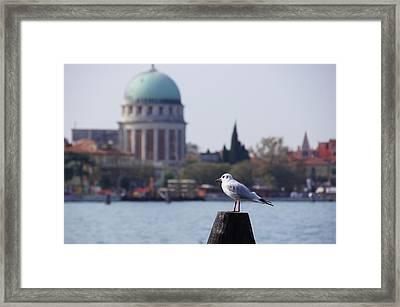 Lido Gull Framed Print