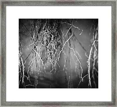 lie Framed Print