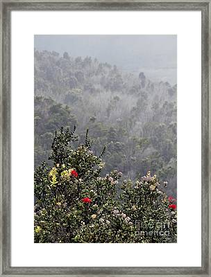 Framed Print featuring the photograph Life After Death by Gina Savage