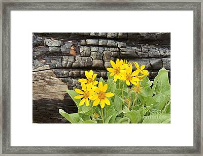 Life After Fire Framed Print by Michele Penner
