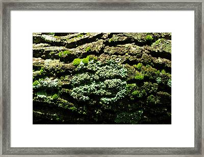Life After Life Framed Print by Rebecca Sherman