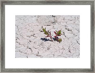 Life Against All Odds Framed Print
