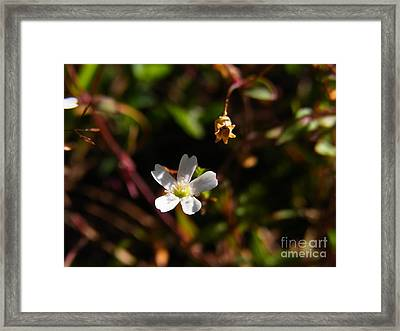 Framed Print featuring the photograph Life And Death by Agnieszka Ledwon