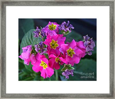 Life And Death Of Flowers Framed Print by Kenny Bosak