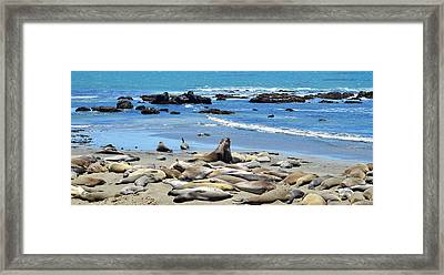 Life At The Rookery Framed Print by Lynn Bauer