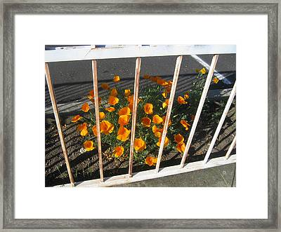 Framed Print featuring the photograph Life Behind Bars by Marie Neder