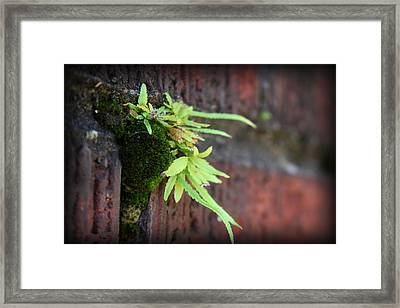 Life Between The Bricks II Framed Print