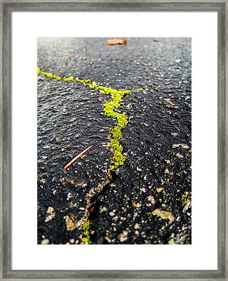 Life Between The Cracks Framed Print by Mike Lee