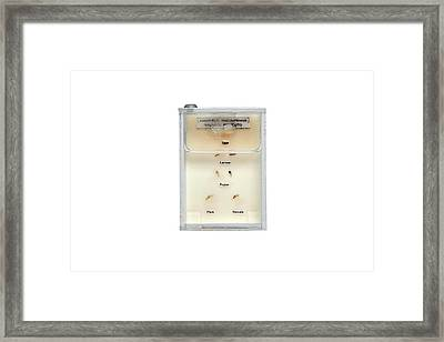 Life Cycle Of Malaria Mosquito Framed Print by Gregory Davies