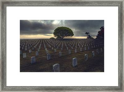 Life Cycles  Framed Print by Kenny  Noddin