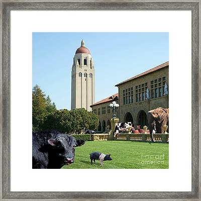 Life Down On The Farm Stanford University California Square Dsc685 Framed Print by Wingsdomain Art and Photography