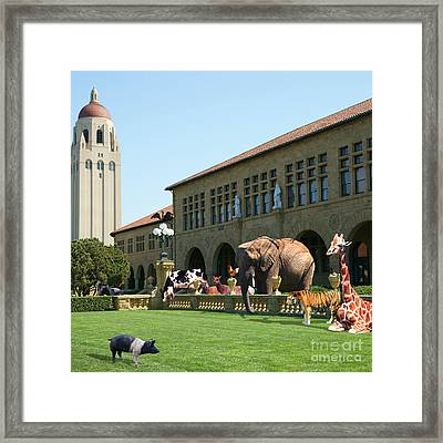 Life Down On The Farm Stanford University California Square V2 Dsc685 Framed Print by Wingsdomain Art and Photography