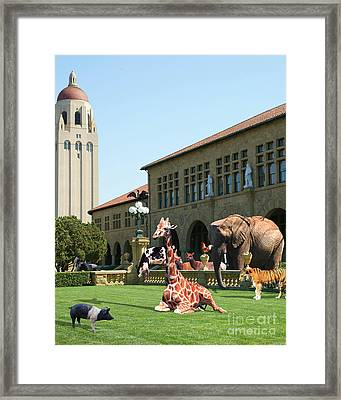 Life Down On The Farm Stanford University California Vertical Dsc685 Framed Print by Wingsdomain Art and Photography