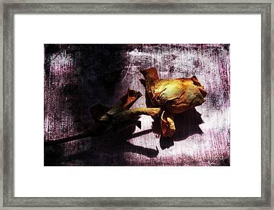 Life Ended Framed Print by Randi Grace Nilsberg