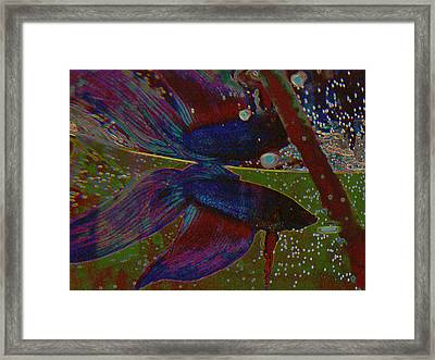 Life In A Fishbowl 1 Framed Print