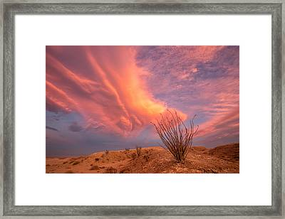 Life In The Fishbowl Framed Print by Peter Tellone