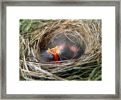 Life In The Nest Framed Print