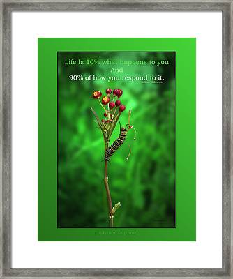 Life Is Slow And Steady Framed Print