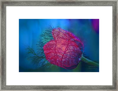 Life Framed Print by Itzhak Richter