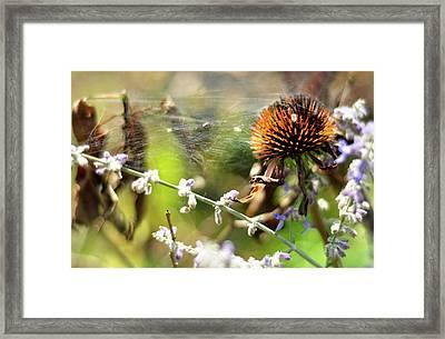 'life' Framed Print