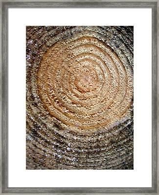 Life Line Log Framed Print by Michel Mata