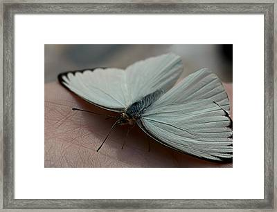 Life Lines Framed Print by Laura Fasulo