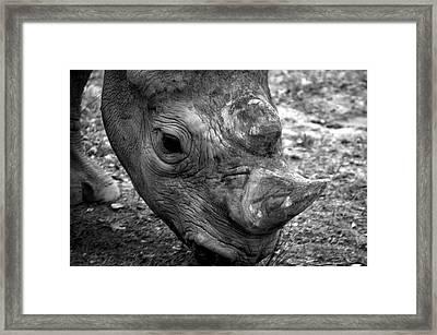 Life Lines Rhino Framed Print by Thomas Woolworth