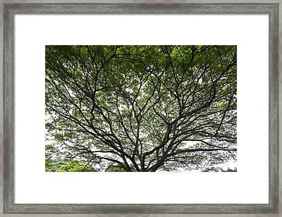 Tree Of Life Framed Print by Sean Davey