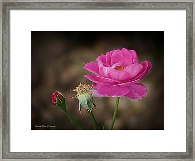 Framed Print featuring the photograph Life by Lucinda Walter