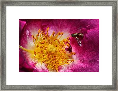 Life Framed Print by Mike Farslow
