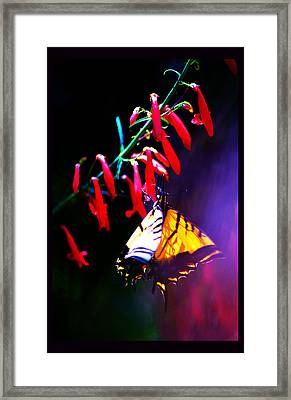 Life Of Butterfly Framed Print by Susanne Still