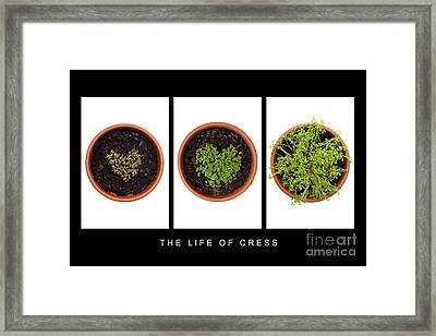 Life Of Cress Framed Print by Anne Gilbert