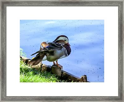 Life Of Duck II Framed Print
