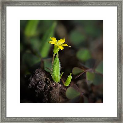 Life Framed Print by Tin Lung Chao