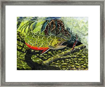 Life Under The Brook Framed Print by Carey MacDonald