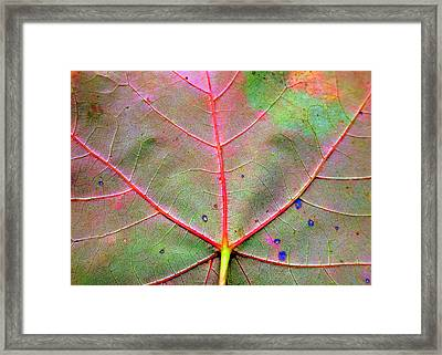 Lifeblood Framed Print