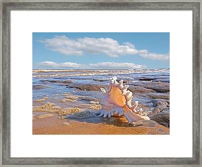 Life's A Beach - Murex Ramosus Seashell Framed Print