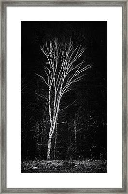Life's A Birch No.2 Framed Print by Mark Myhaver