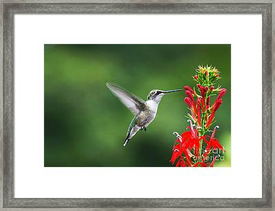 Lifes Little Pleasure Framed Print by Judy Wolinsky