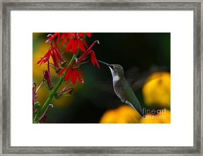 Lifes Little Pleasures 2 Framed Print by Judy Wolinsky