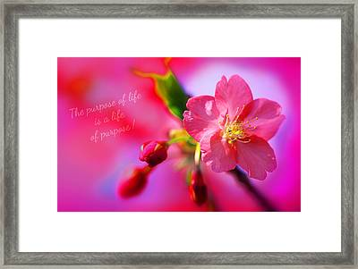 Life's Purpose Framed Print by Li   van Saathoff