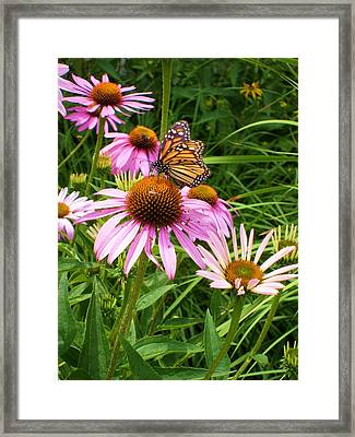 Life's Rare Jewels Framed Print by Ann Willmore
