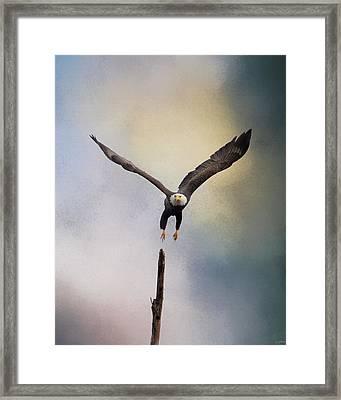 Lift Off - Bald Eagle Framed Print