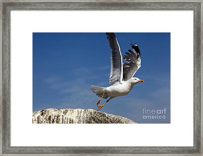 Lift Off Framed Print
