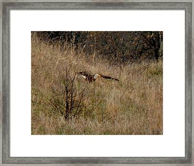 Lift Off Framed Print by Wild Thing