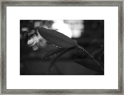 Framed Print featuring the photograph Light And Dark by Miguel Winterpacht