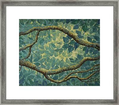 Light And Leaves Framed Print